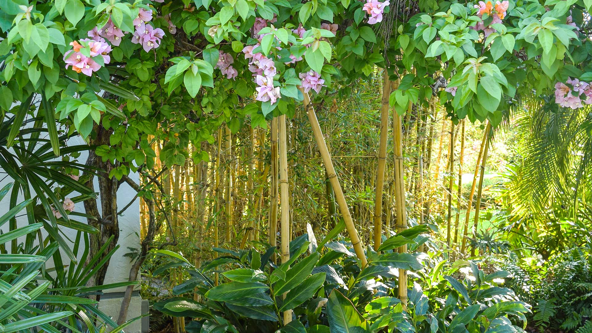 yard with bamboo and flowers